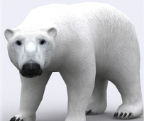 Unity3d模型 北极熊 3DRT-animals wild Polar Bear